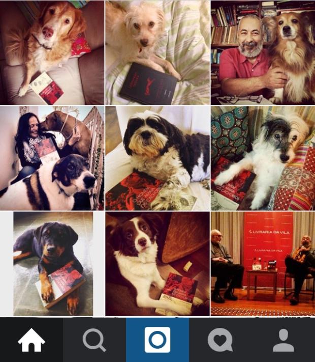 boitempo no instagram cachorros